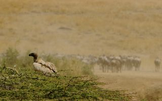 5 Days Amboseli, Tsavo & Taita Hills Sanctuary